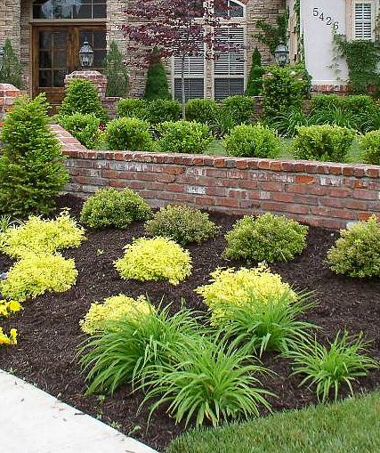 Image gallery green shrubs for Green bushes for landscaping